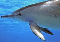 Auge in Auge von Gesellschaft zur Rettung der Delphine e.V.